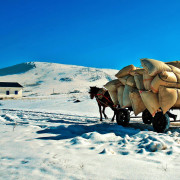 Fully_Loaded_Horse_Cart