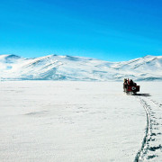 Horse_Cart_on_Snow