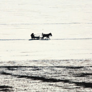 Horse_Chasing_on_Lake